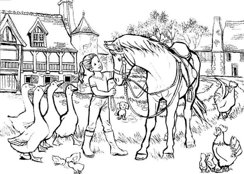 pferde und tiere