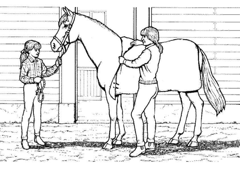 pferde mit reiter 3 ausmalen