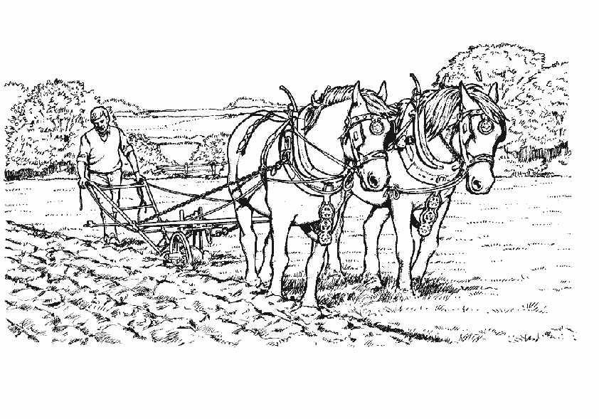 pferden ausmalbilder
