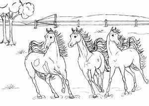 pferde familien 1