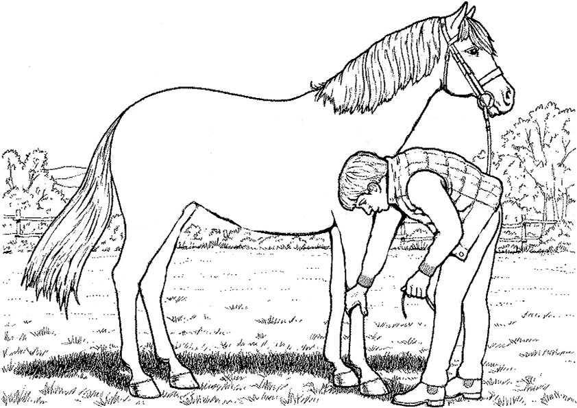 junge mit pferd