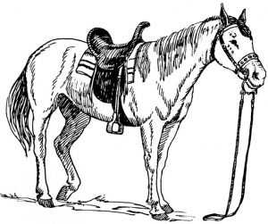 ausmalbilder pferde 58