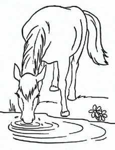 pferd 17